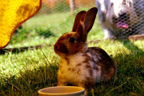 Why Is My Rabbit Losing Weight And What Can I Do?