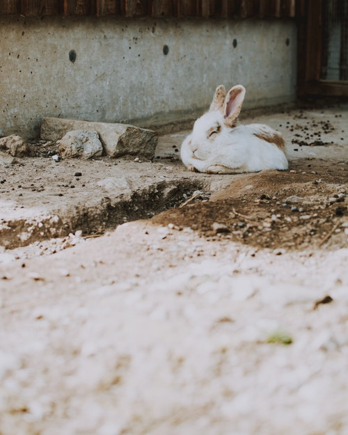 How To Care For Rabbits Indoors