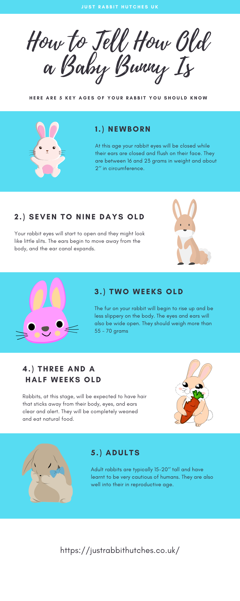 How to Tell How Old a Baby Bunny Is