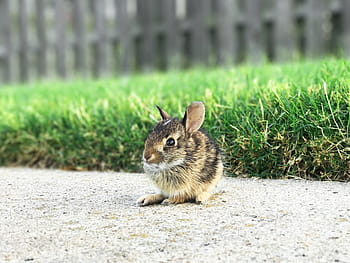 How To Care For Baby Bunnies Without Mother Rabbit - Just Rabbit Hutches