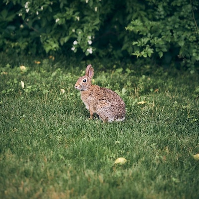 What Wild Rabbits Eat Most