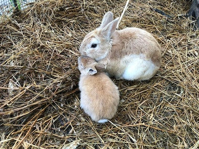 Why Do Rabbits Eat Their Babies?