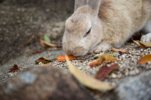 What Do Wild Rabbits Like To Eat Most