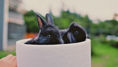 Why should I keep my pet rabbits outside