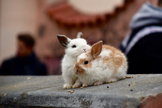 Do Rabbits Get Jealous Of Each Other?