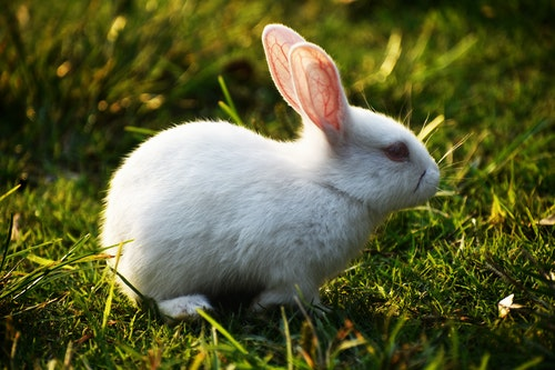 GI Statis In Rabbits: Causes, Symptoms And Treatments.