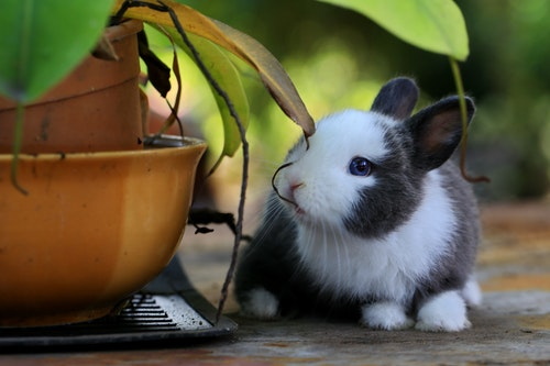 Can Rabbits Eat Oranges? Vital Information You Need To Know