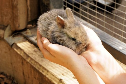 Do Rabbits Get Depressed? 7 Common Reasons Why