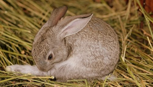Do Rabbits Sleep With Their Eyes Open?