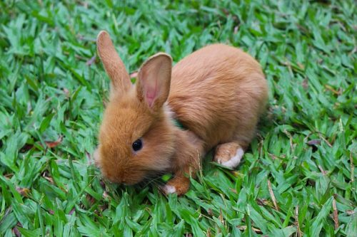 Do Rabbits Have Good Hearing? Learn The Facts!