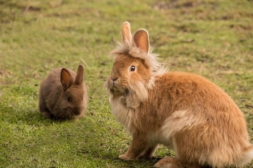 How Long Do Rabbits Feed Their Babies For?