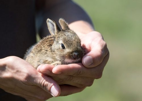 What Age Can Rabbits Leave Their Mothers?