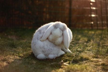 How do you fix bad rabbit behavior?