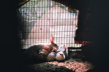 Kit Care: How Long Do Baby Rabbits Stay In The Nest?