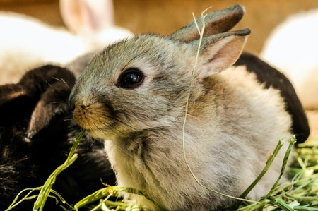 Horny Bunny: Why Is My Rabbit Trying To Hump Me?