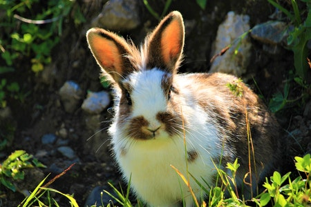Do Rabbits Fur Colours Affect Their Personalities?